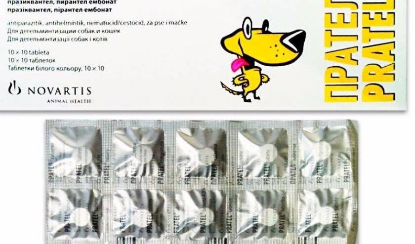 Прател для собак: инструкция по применению, цена, отзывы | все о собаках