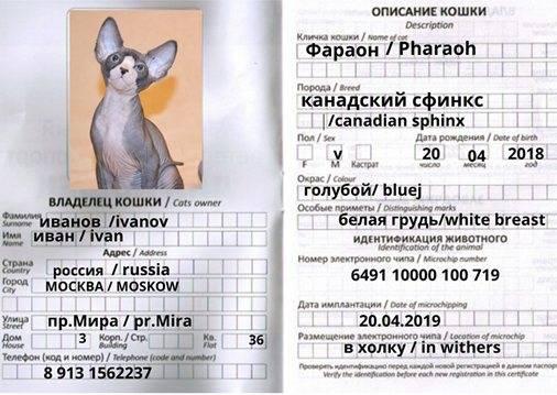 Ветеринарный паспорт для кошки: как получить и на что обратить внимание при оформлении ветпаспорта