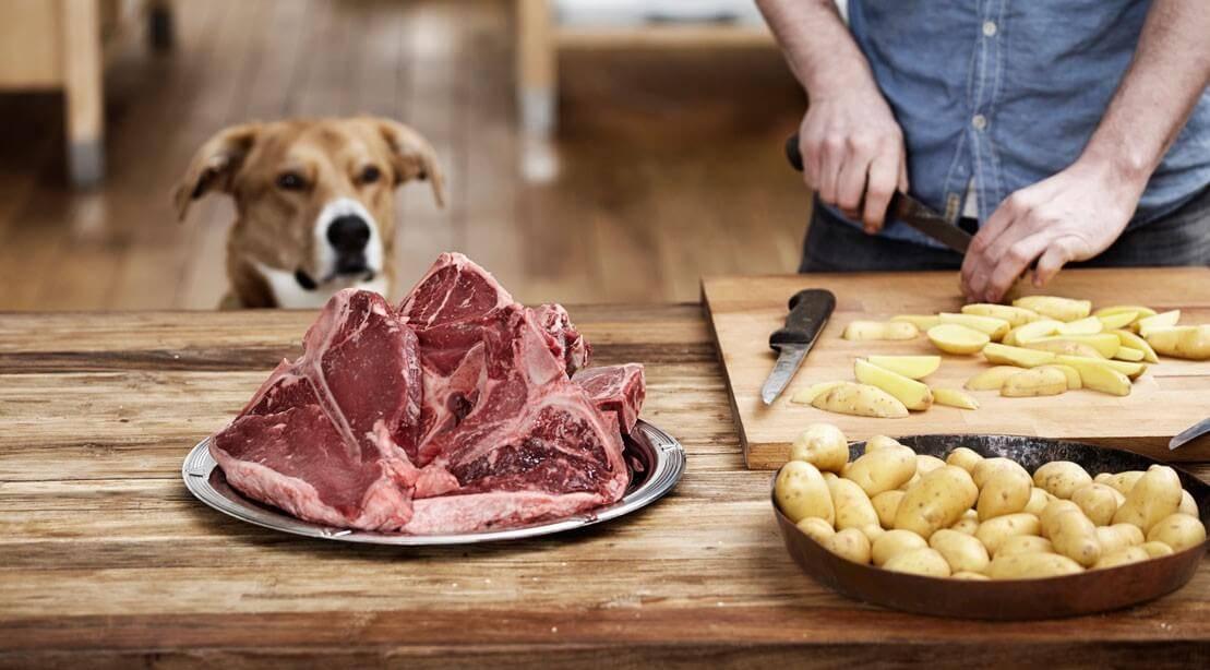 Чем кормить стерилизованную собаку?