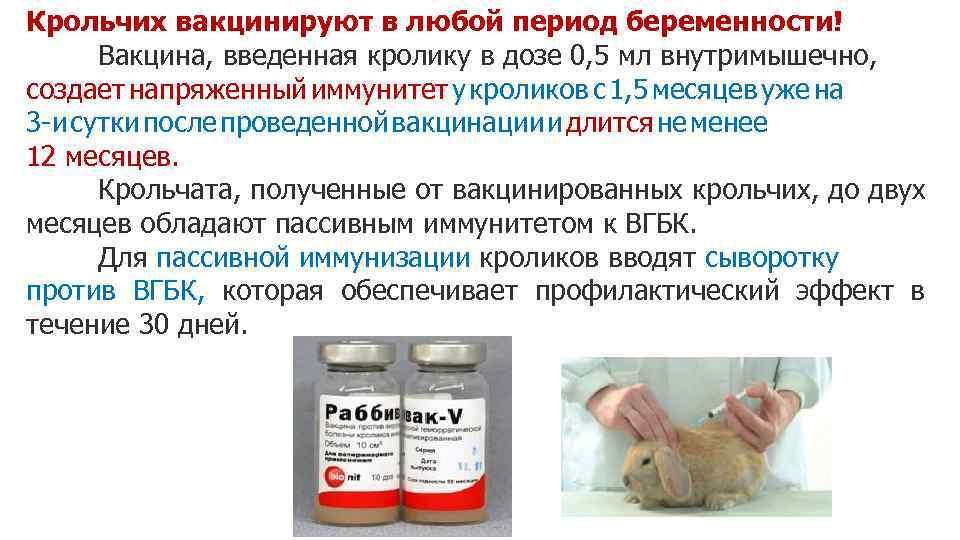 Вакцина для кроликов от миксоматоза и вирусной геморрагической болезни: инструкция по применению - вет-препараты