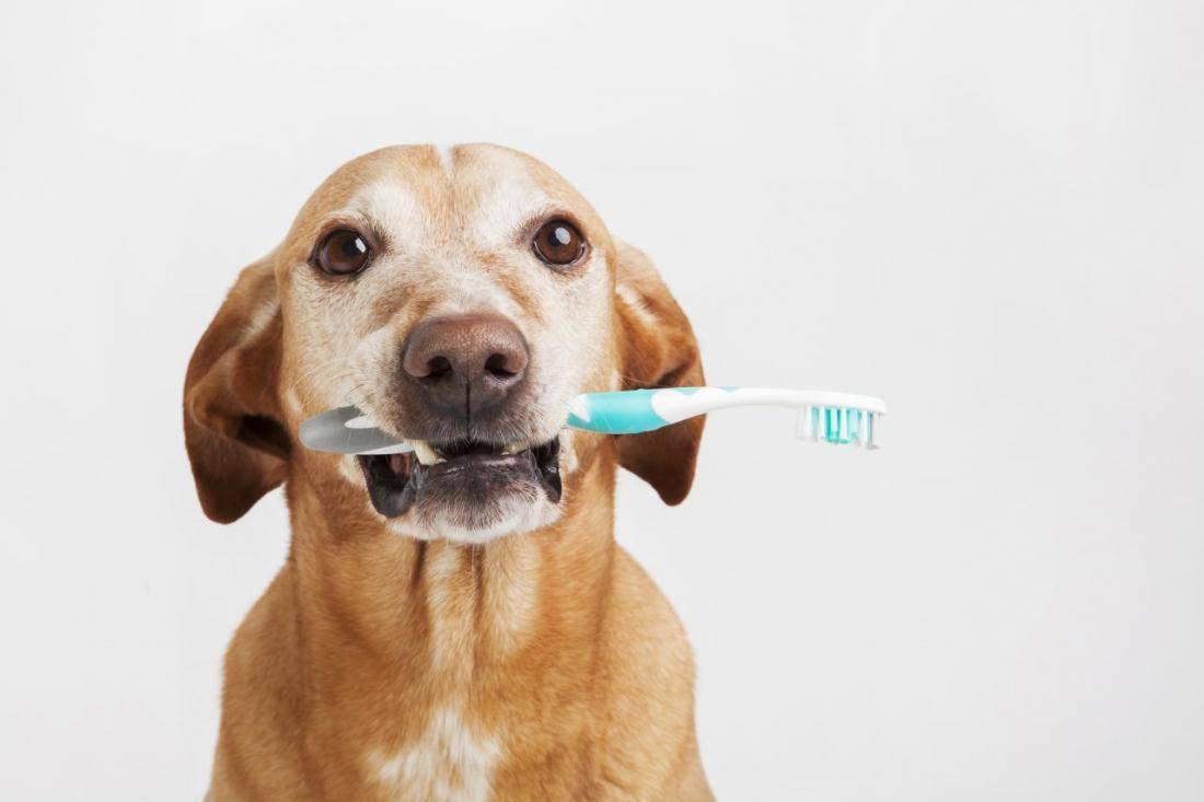 Почему у кошки выпадают зубы?