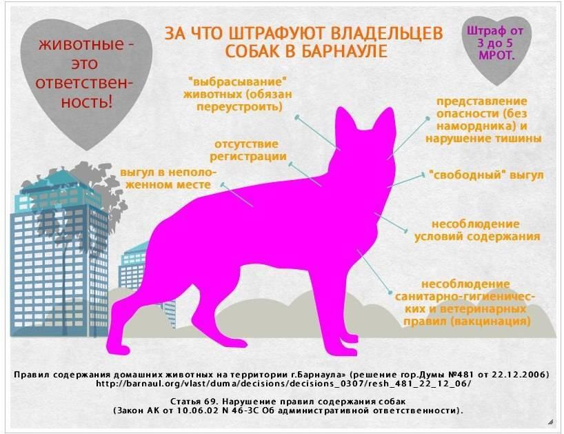Разрешено ли содержание собаки в доме согласно православным традициям