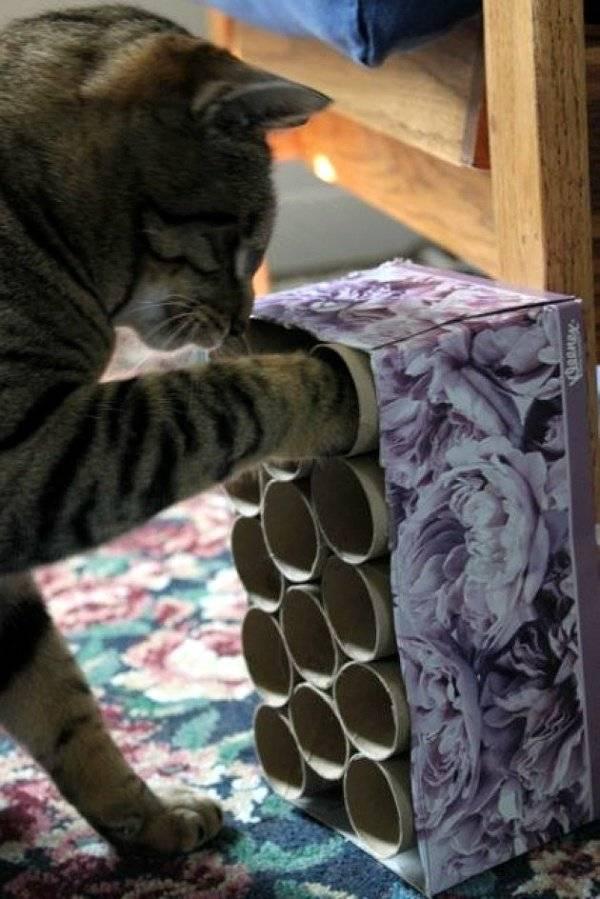 10 лайфхаков для котов и кошек