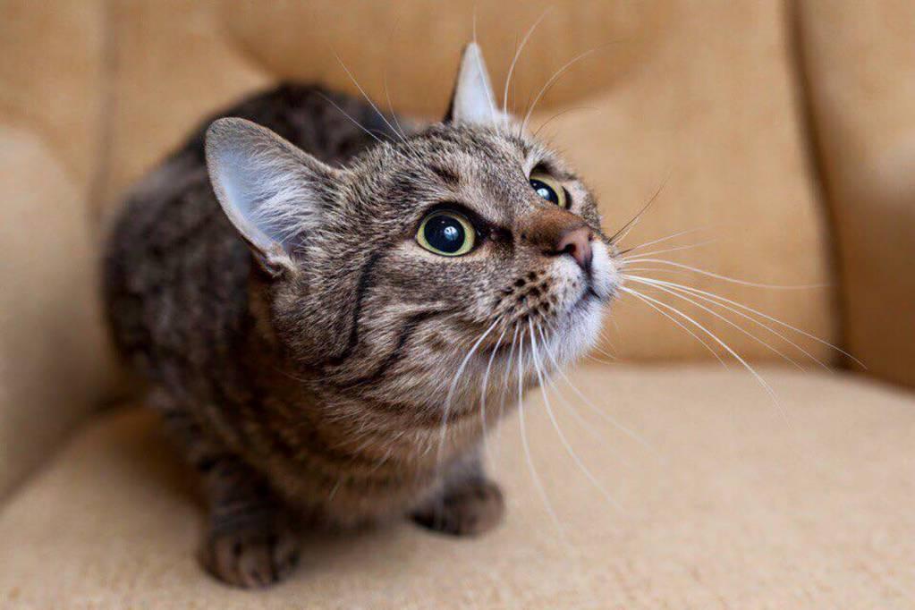 Какие кошки лучше ловят мышей?