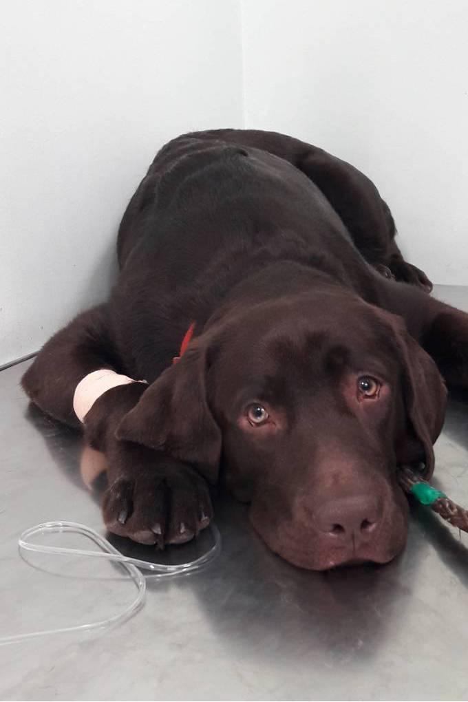 Пироплазмоз у собак - симптомы, лечение, профилактика | евровет