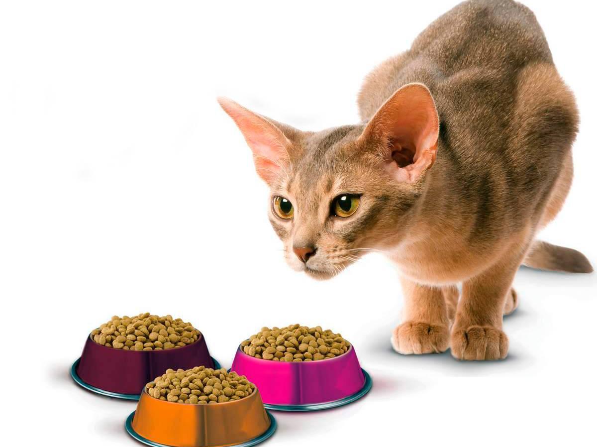Советы от ветеринаров — чем лучше кормить кошек
