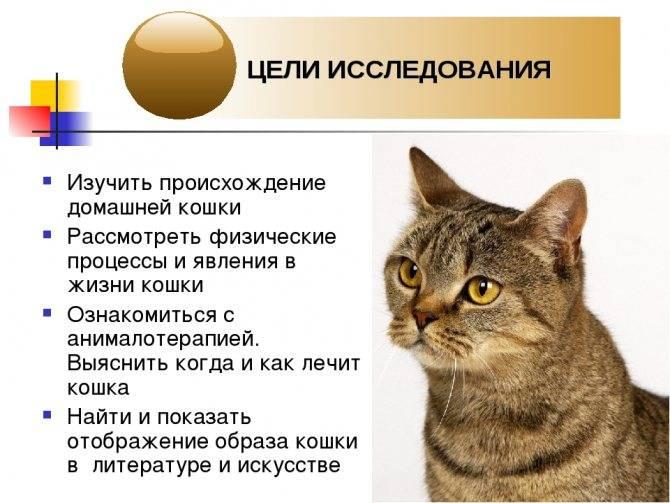 Половое созревание у котов: признаки, осложнения