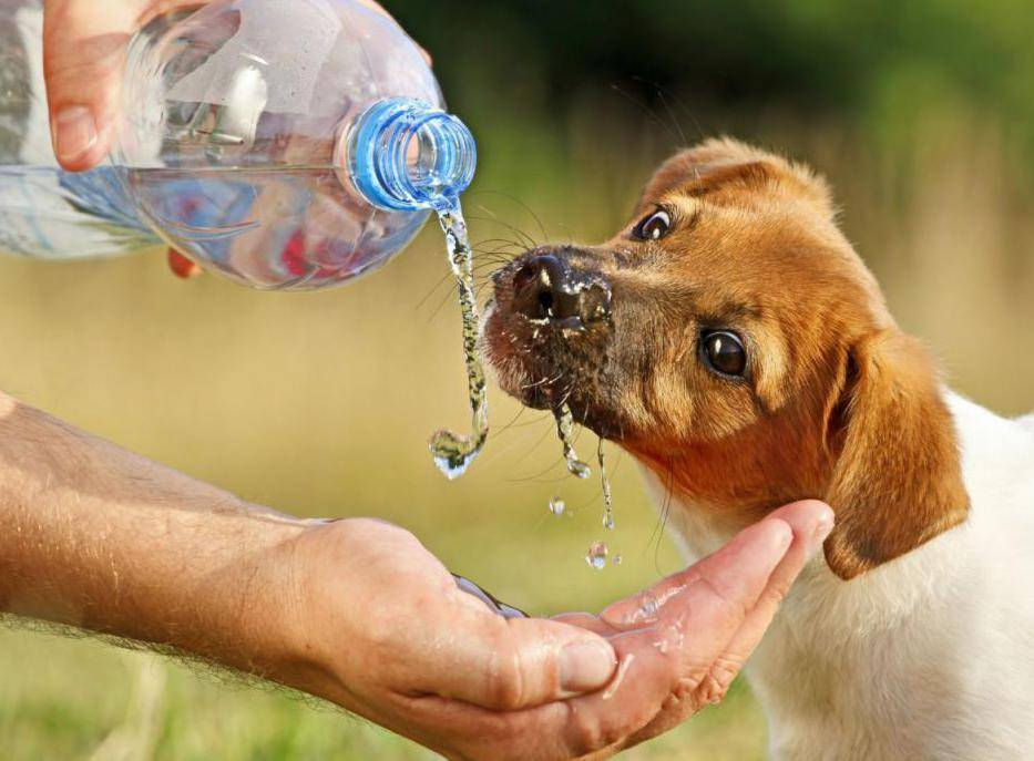 Помощь собаке в жару: основные правила и важные рекомендации