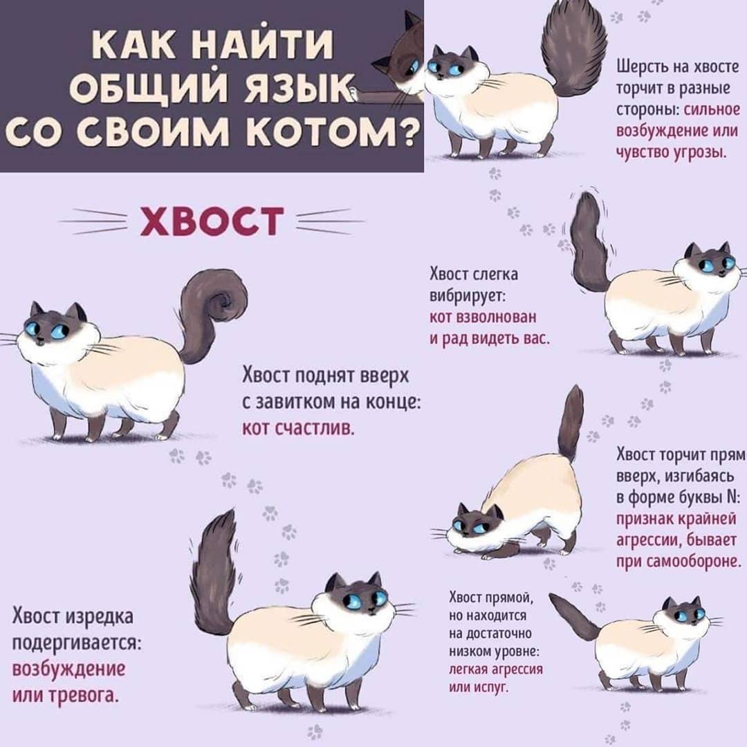 Почему кошки виляют хвостом, что это значит?