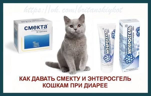 Понос у котенка: что делать и как лечить в домашних условиях