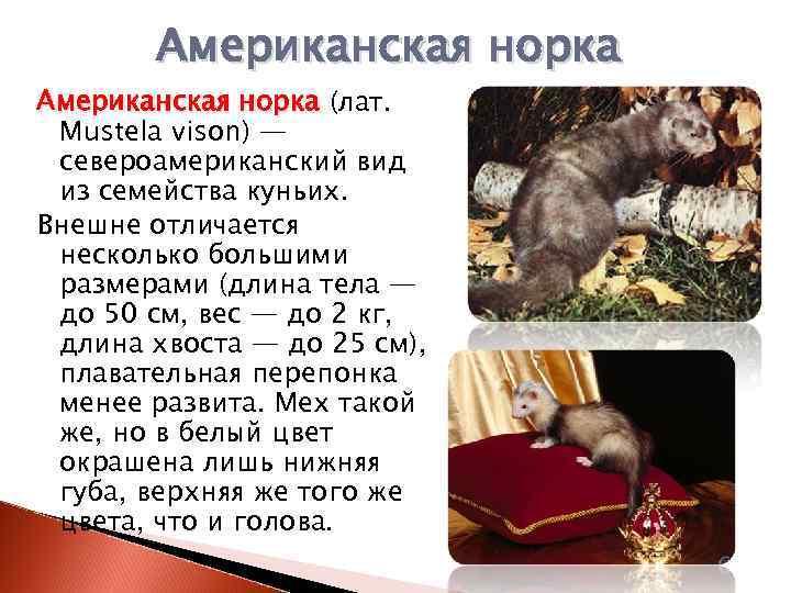 Домашняя выдра: ласковый зверёк или дикое животное