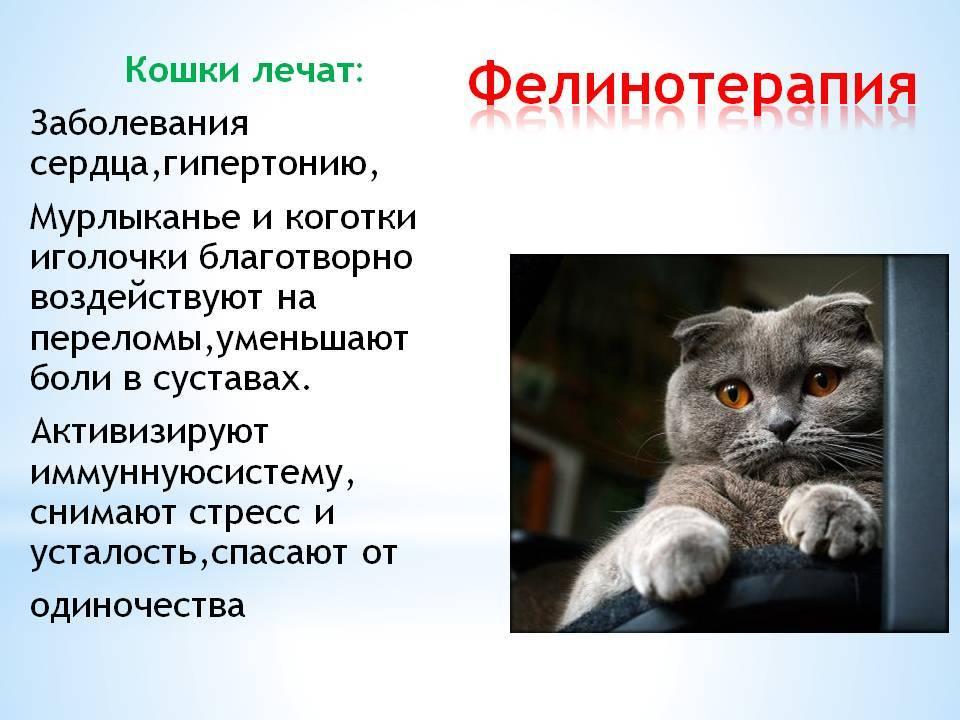 Почему кошки мурлыкают когда их гладишь