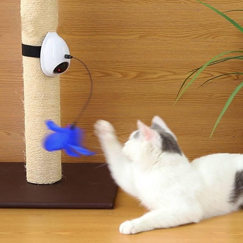 Игрушка для кота своими руками: 50 лучших идей и вариантов на фото