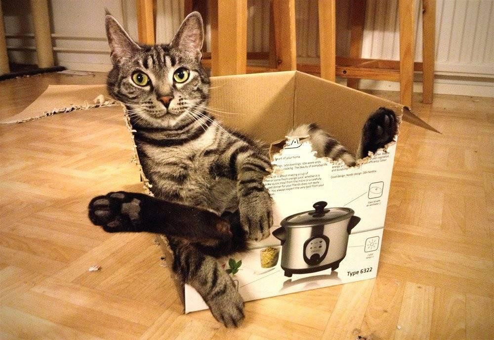 Как приучить немолодого кота к новому дому или квартире, каким образом проходит адаптация котенка?