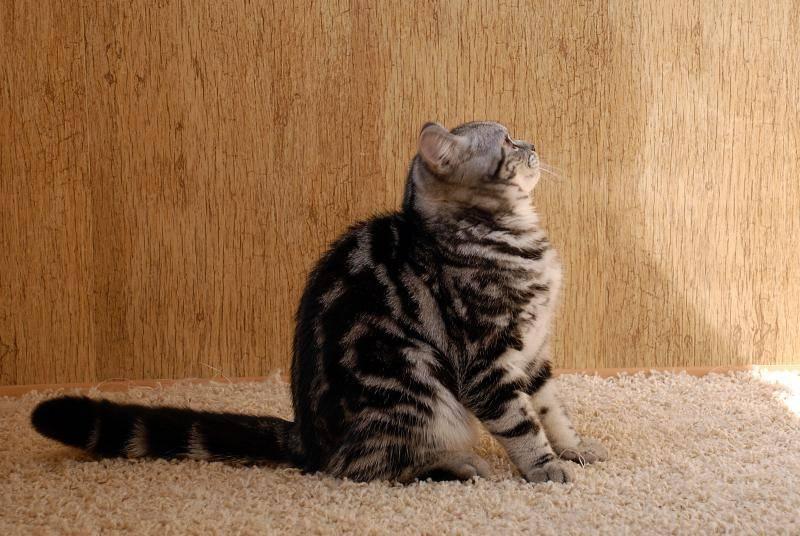 Кошки бывают разные: чёрные, белые, красные
