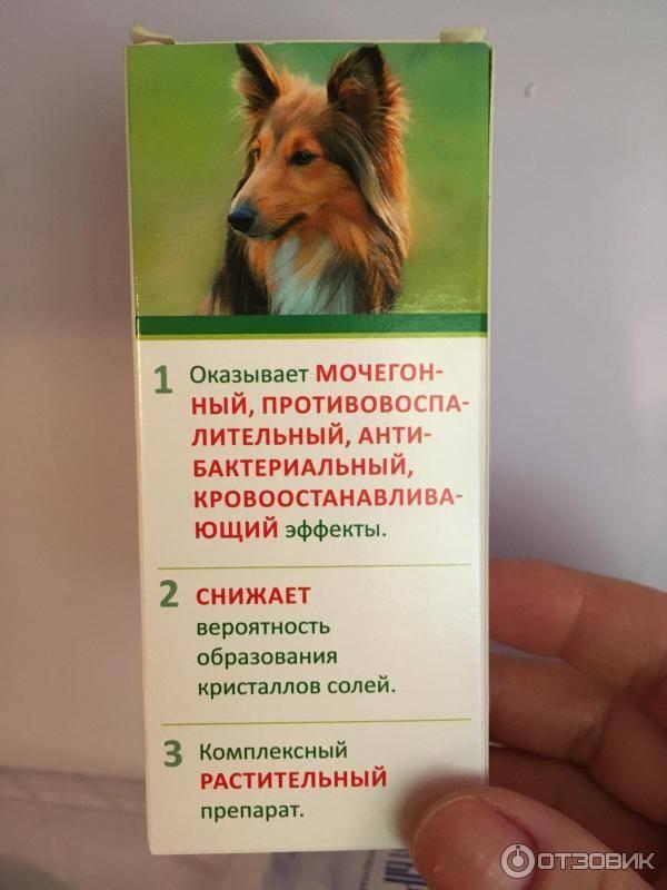 Уролекс для собак
