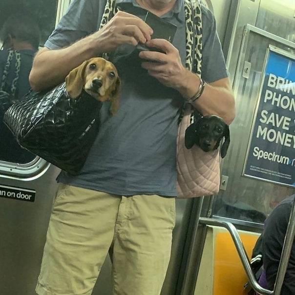 Правила перевозки собак автобусом