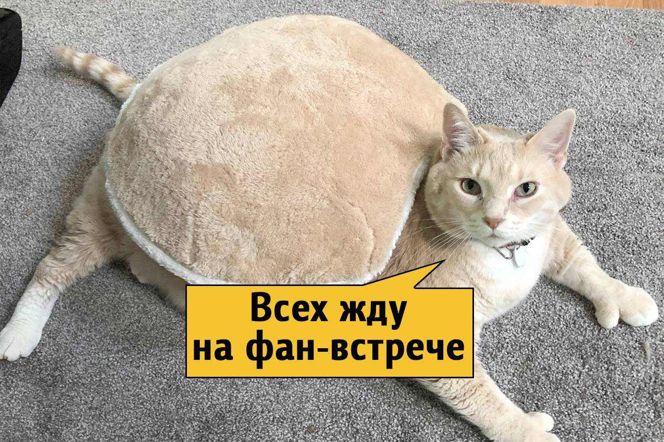 Сколько весит кошка и кот: таблица по возрасту, нормальный вес взрослой кошки