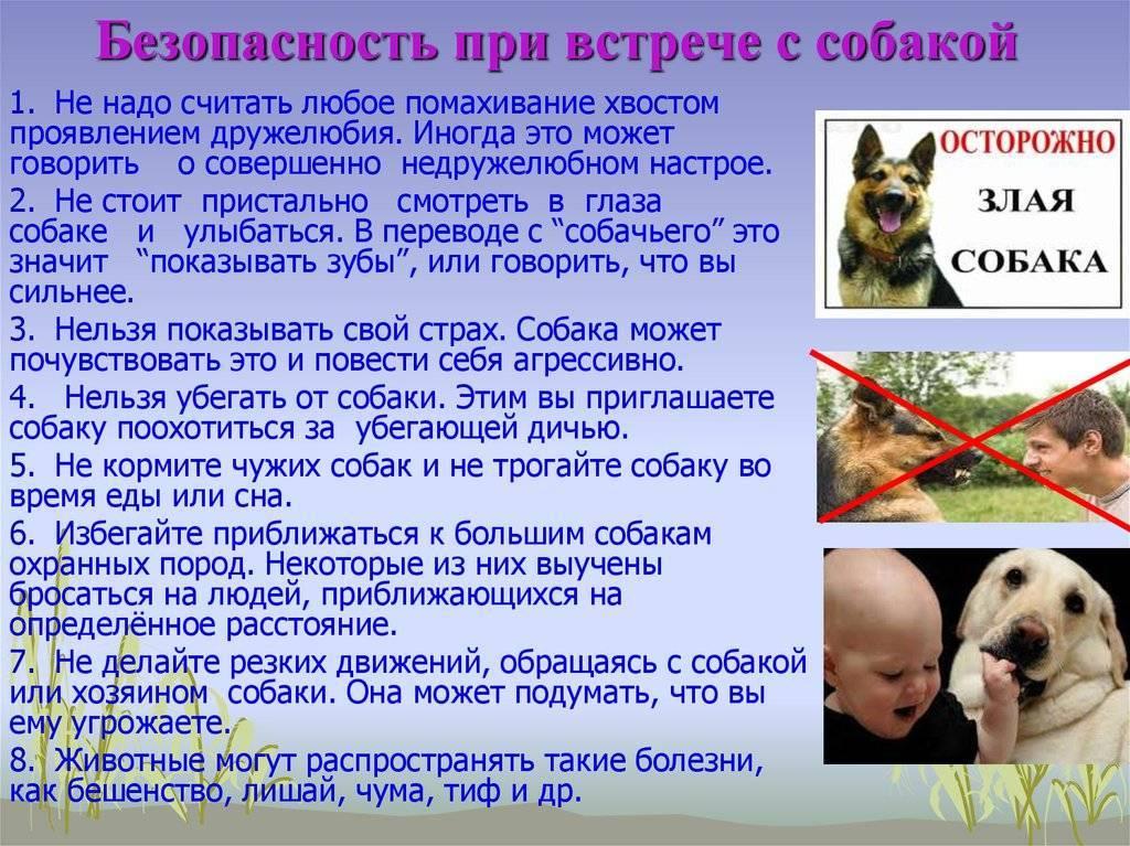 Почему собакам нельзя смотреть в глаза