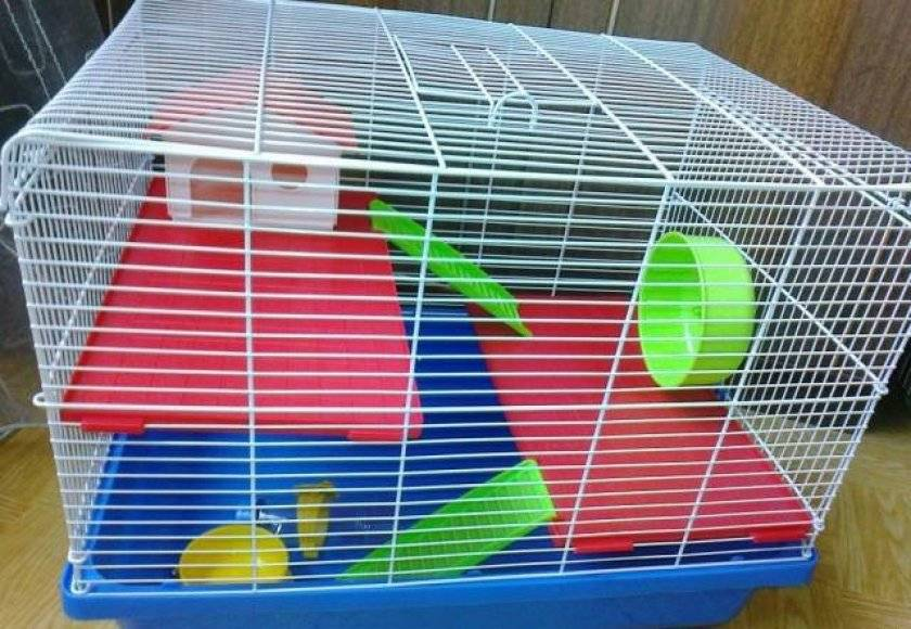 Новый питомец дома: уход за хомячком