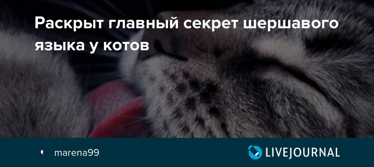 Язык кошек: строение и заболевания