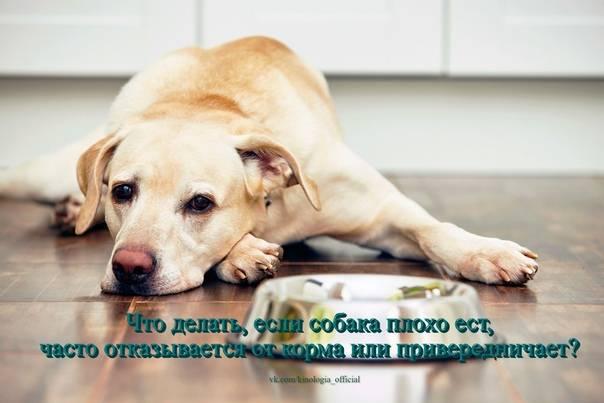 Как откормить истощённого пса