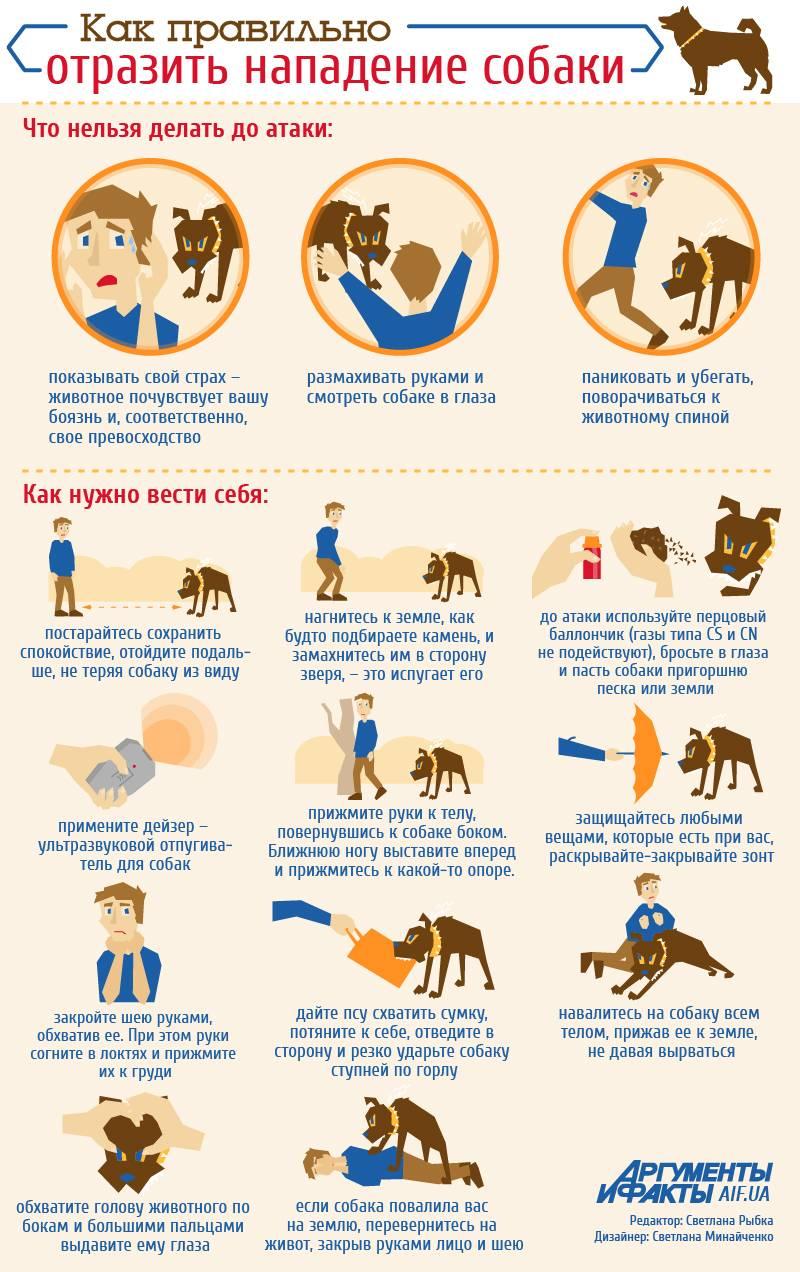 Как дрессировать собаку из приюта — пойдём домой
