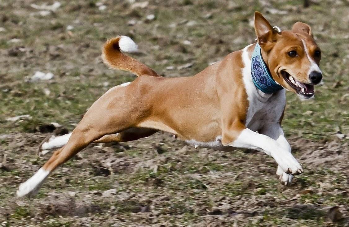Почему собака не лает на чужих людей, воспитание и обучение