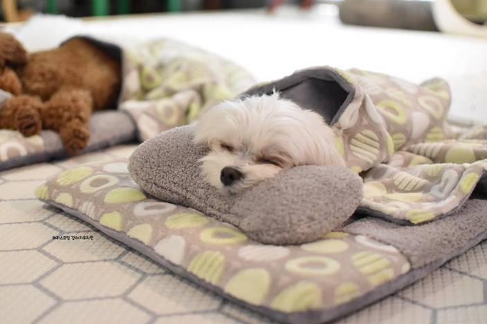 Щенок не спит и скулит ночью: советы и рекомендации. как приучить щенка спать ночью