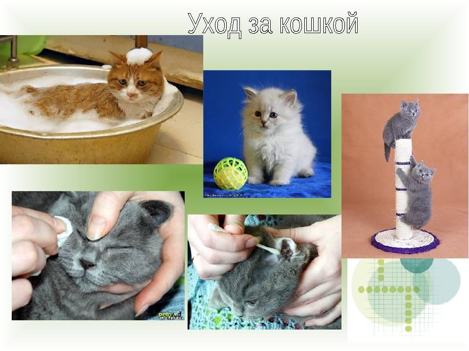 Мой опыт выхаживания новорожденных котят-сирот - кошки
