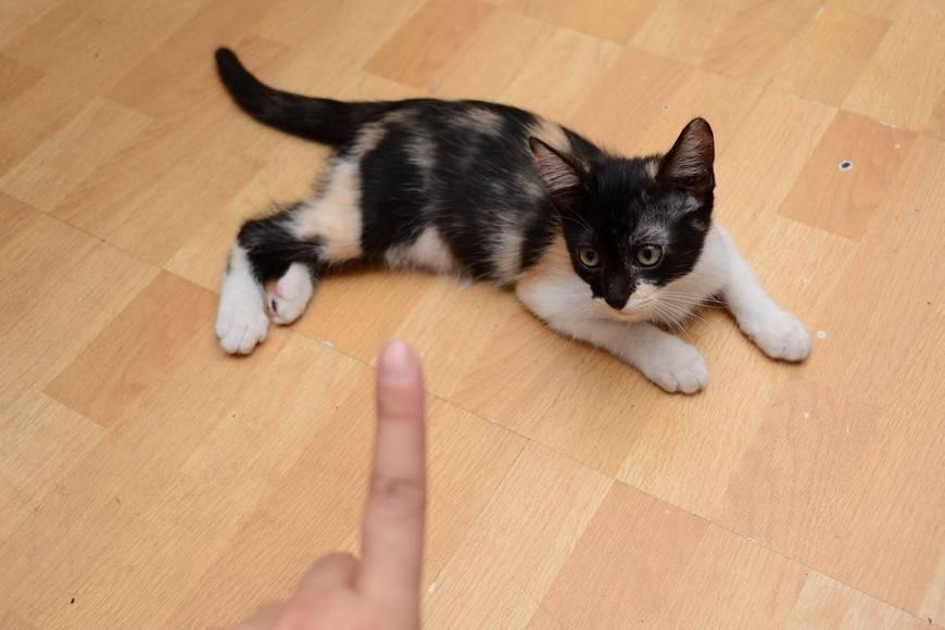 Как отучить кошку кусаться