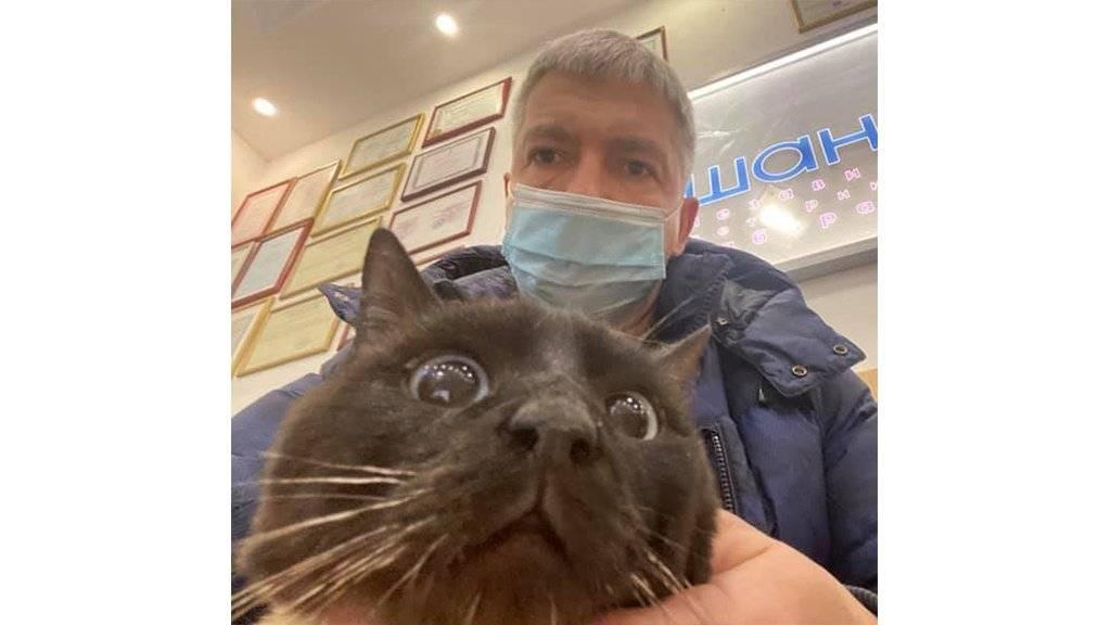 Кошки спасают людей, случаи когда кошка спасла жизнь человеку, спасение хозяина кошкой