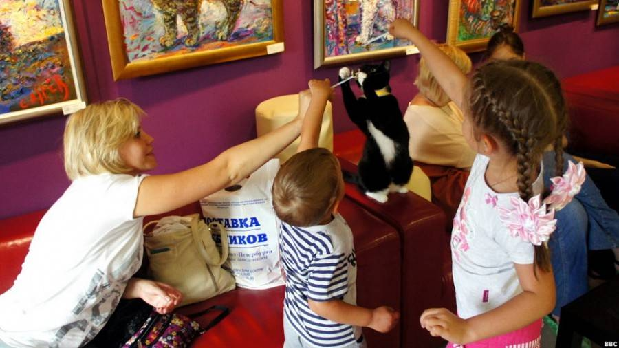 Кафе, куда пускают с животными в санкт-петербурге. рестораны кафе, куда пускают с животными