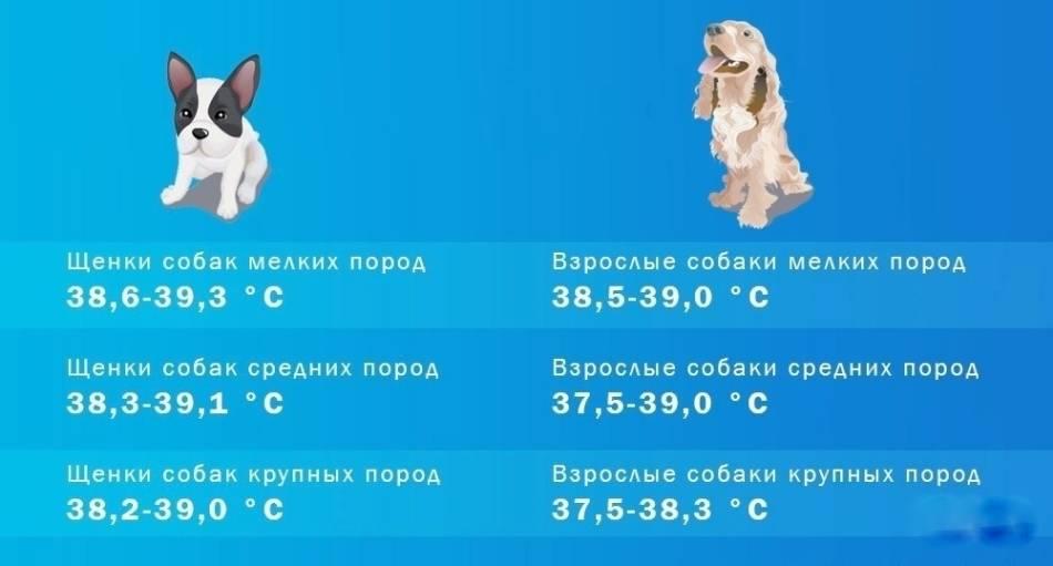Какая нормальная температура у собак, как измерить, причины повышенной или пониженной температуры