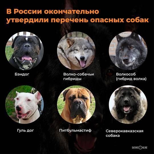 10 самых опасных собак в мире с фотографиями и названиями
