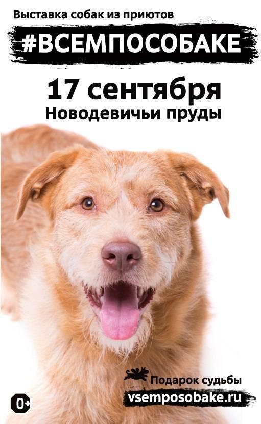 Благотворительные акции для животных проходящие в нашей стране
