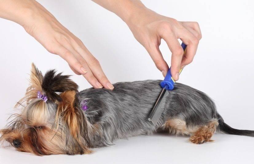 По каким причинам у собаки может быть частая икота - интересное про собак