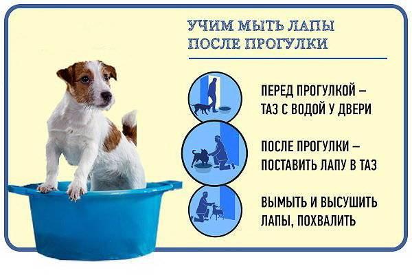 Как правильно кормить щенка. основы здорового питания