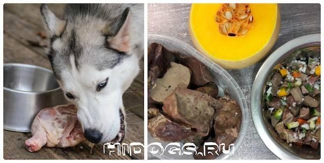 Можно ли смешивать собакам или чередовать сухой корм и мясо?