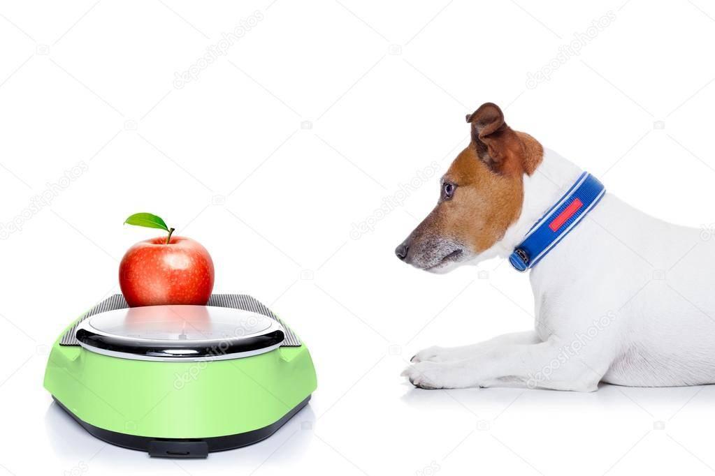 Как похудеть собаке: рацион при ожирении, диетический корм