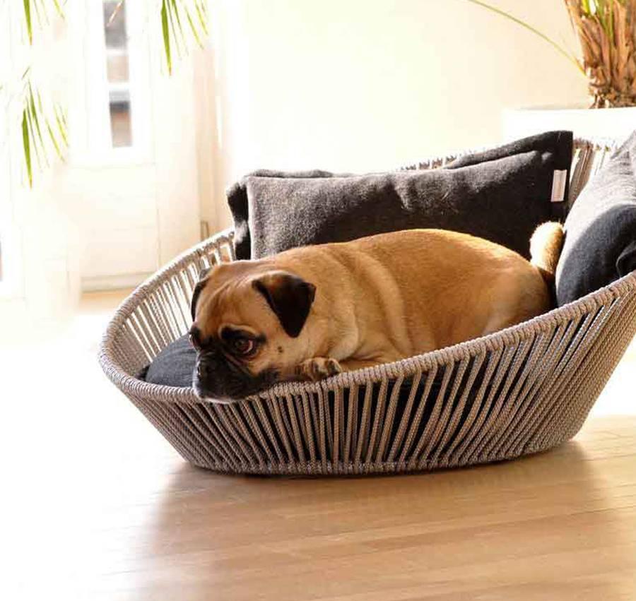 Как содержать собаку в квартире: делюсь собственным опытом