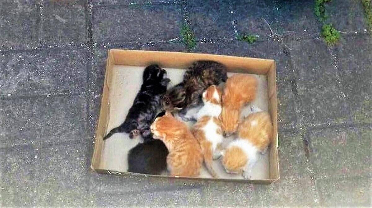 Подобрали котенка с улицы: первые действия