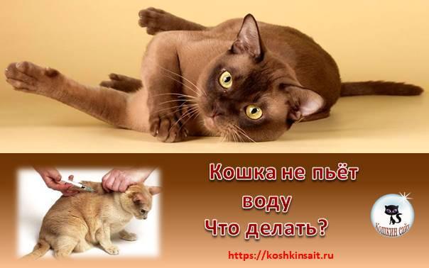 Как заставить кота пить больше воды - kotiko.ru