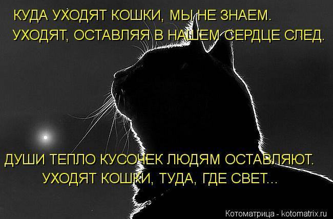 Куда попадают кошки после смерти: есть ли душа у кошек, попадают ли животные в рай, мнения священников и хозяев котов