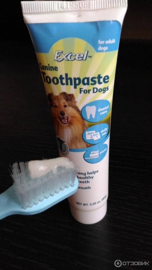 Зубная паста для собак — обзор производителей и лучших средств для чистки зубов собак в домашних условиях (85 фото и видео)