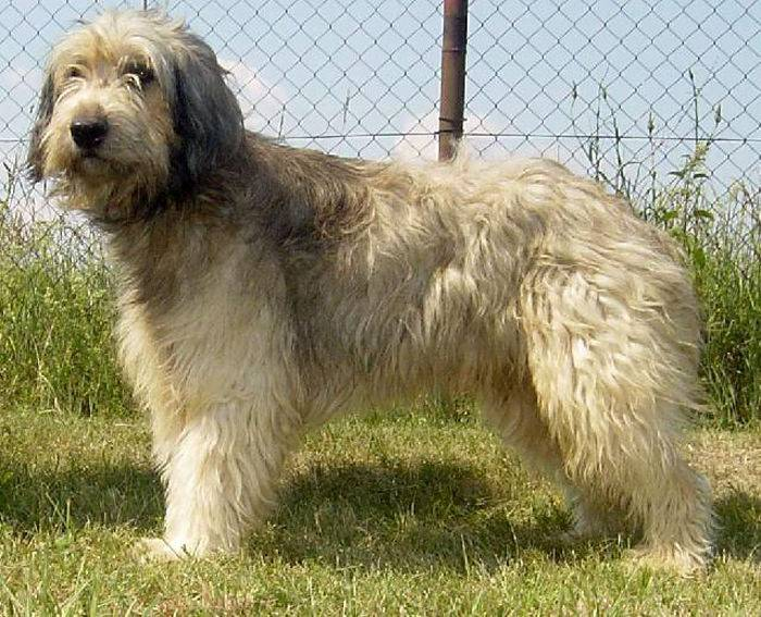Пастушьи породы собак: список представителей с фотографиями, названиями, описаниями и ценами