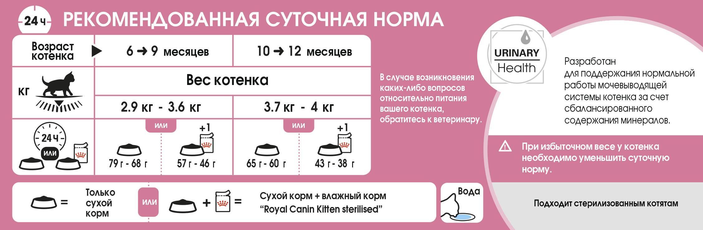 Чем и как часто кормить двухмесячного котенка?