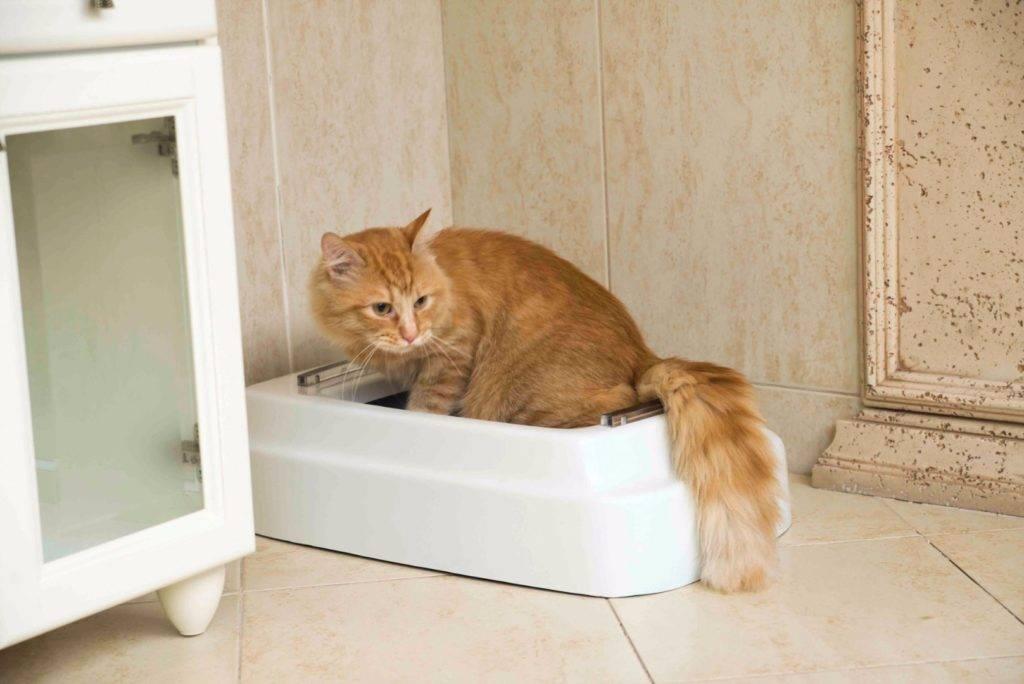 Почему кошка ходит мимо лотка: основные причины и что делать