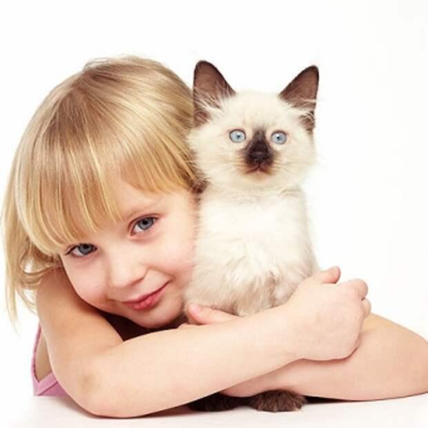 Как воспитать котенка ласковым и спокойным?
