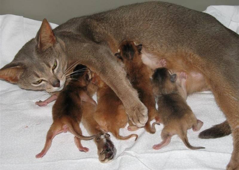 Во сколько котята начинают ходить
